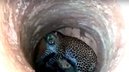 VIDEO: Fearless vet climbs down 30ft dry well to rescue LEOPARD in Guwahati