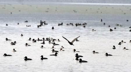 Over 1,500 birds of around 15 species found dead around Sambhar Lake in Jaipur