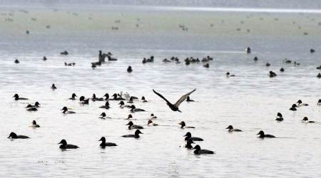 Over 1,500 birds of around 15 species found dead around Sambhar Lake in Jaipur