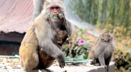 Examine relocating monkeys to alternative site, Delhi High Court tells AAP govt