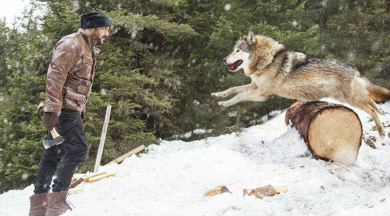 Salman Khan battles wolves in 'Tiger Zinda Hai'