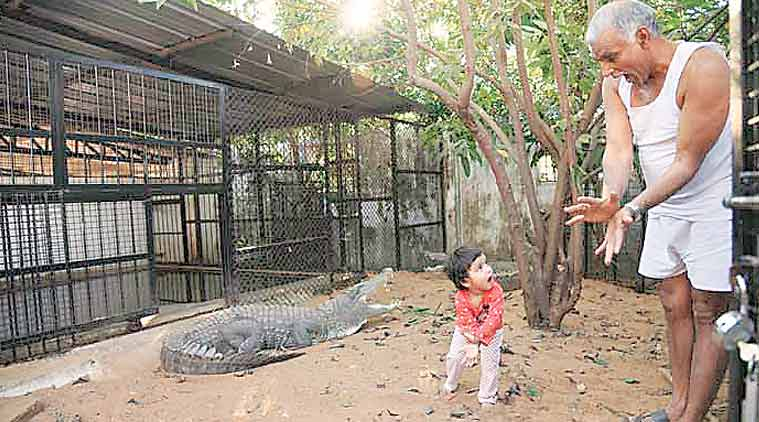 Animal Ark Rescue Centre, conventional zoo, Prakash Amte, National Tiger Conservation Authority, Wildlife Conservation, indian express