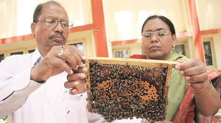 bee basket, pune startup, bee keeping, trigona, honey bee, indian express