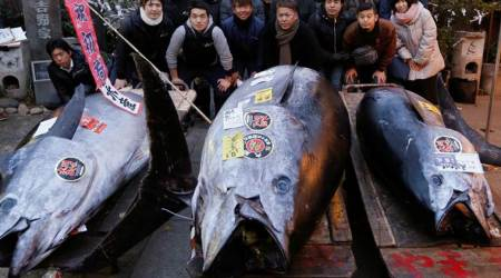 Bluefin tuna sold for $320,000 in Tsukiji's last new year auction