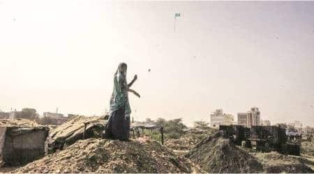 Gujarat: Kite strings kill 214 birds, injure over 4,000 in last fivedays