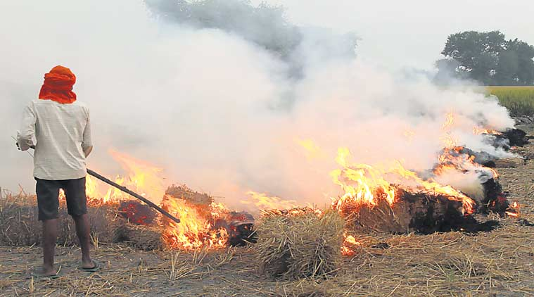 Punjab stubble burning, Haryana stubble burning, Uttar Pradesh stubble burning, SC, Supreme Court, India News, Indian Express, Indian Express News
