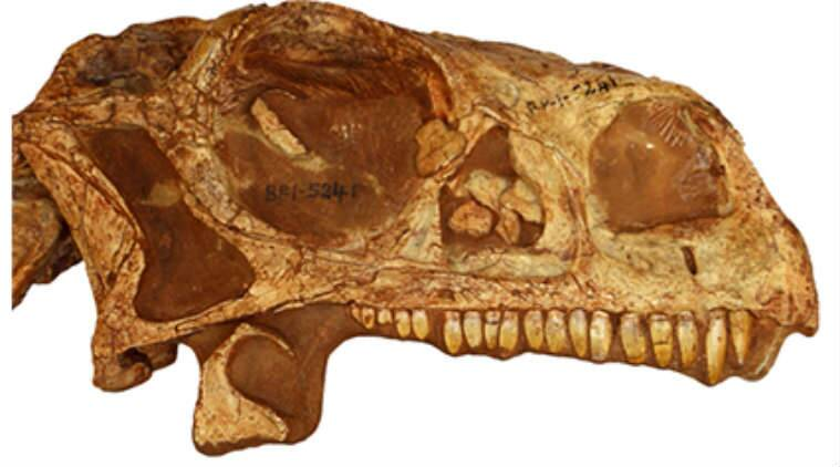 200-year-old dinosaur skull, 3D printed skull, University of the Witwatersrand, 3D printing technology, CT scans, Golden Gate National Park, fossilised eggs,
