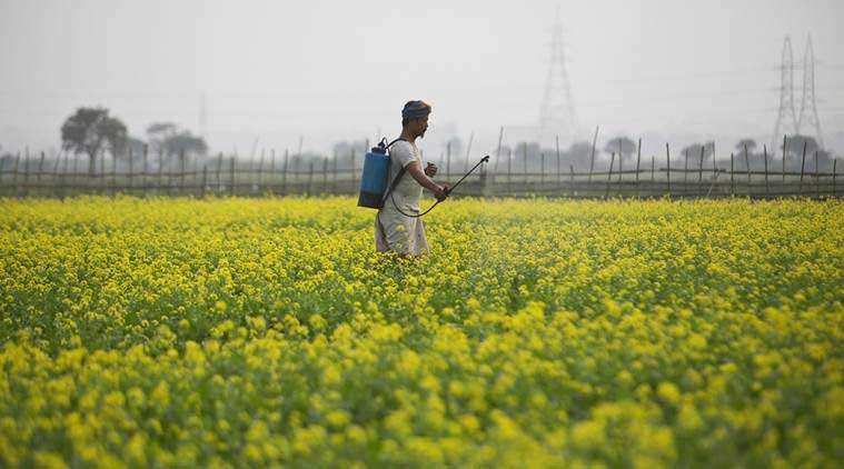 Pesticide Management Bill, Indian farmers, india farmers, pesticides death, pesticides in market, GST, indian express