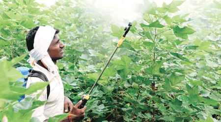 Pesticide death probe blames farmers & govt, experts say soft on manufacturers