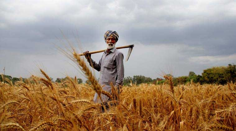 Indian farmers, garemers crisis, farmer loans, farmer suicide, Indian agriculture sector, indian express