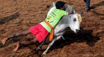 Three killed in bull-taming sports in Tamil Nadu
