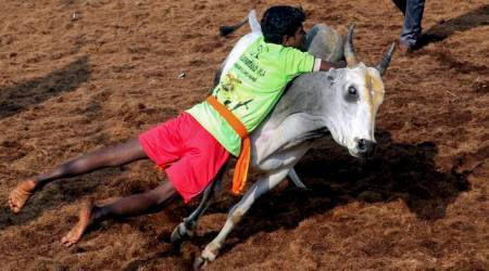 Jallikattu: 19-year-old spectator gored by bull in Madurai event