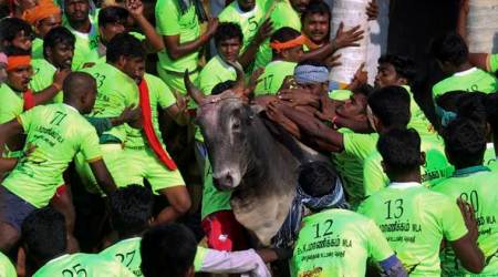 Jallikattu: The bull-taming festival takes place in Tamil Nadu