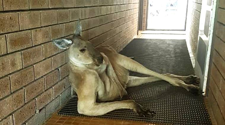 vial post, kangaroo viral picture