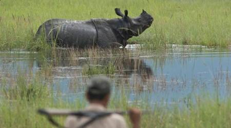 Rhino shot dead by poachers in Kaziranga National Park