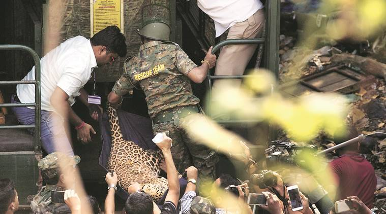 Leopard enters residential area in Mulund locality, injures six people