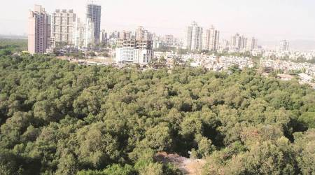 Maharashtra: Mangrove patches to be cleared of all encroachments byMarch