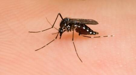 Focus on construction sites to curb dengue,malaria