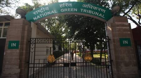 national green tribunal, ngt delhi, tree felling, Indian Forest Service officer, indian express, india news, ngt case