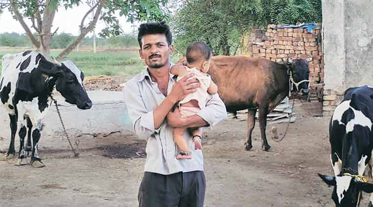 White Truth: Milk turns sour for farmers on back of record powder stocks withdairies