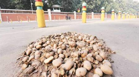 Too many potatoes on Uttar Pradesh's plate