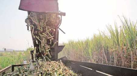 U-turn: No welfare board, but a scheme for sugarcane farmers for now, says Maharashtra Labour Department