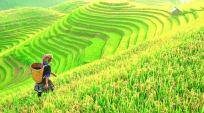 On a slow trek in northwest Vietnam, negotiating the lush greens and rich ethnic culture of Sapa