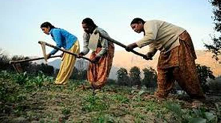 Ignorance about basic rights, widespread indebtedness among Punjab women farm workers, says study