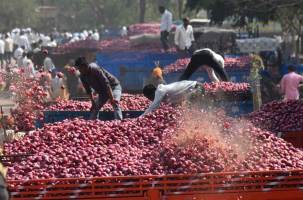 To boost prices, Centre declares 5 per cent export incentive foronions