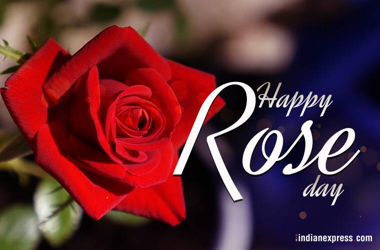 Happy Rose Day 2018: Wishes, Gifs, Best Quotes, Images, Photos