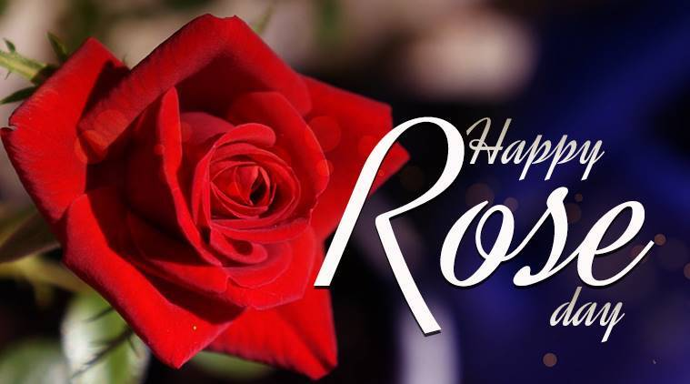 rose day, happy rose day, roses and their meanings, rose meaning, Rose colour Meanings