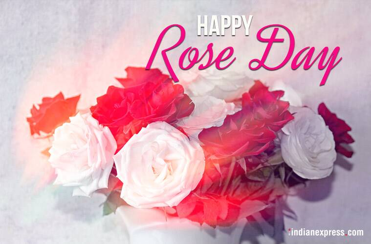Happy Rose Day 2018: Wishes, Gifs, Best Quotes, Images