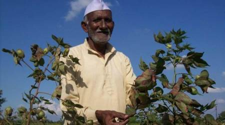 Monsanto's Bt cotton tech to be royalty-free?