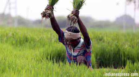 Minimum Support Price, Narendra Modi, Farmer crisis, election 2019, general elections, Kharif season, arun jaitley, Paddy crop, MSP for paddy, MSP crops, indian express