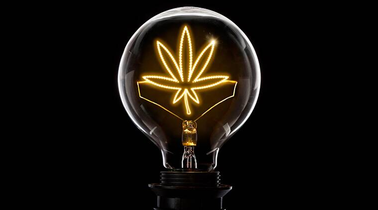cannabis bulb of ideas