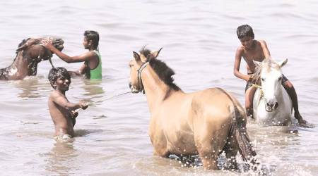 Gujarat: Movement of horses barred after Glanders case in Junagadh