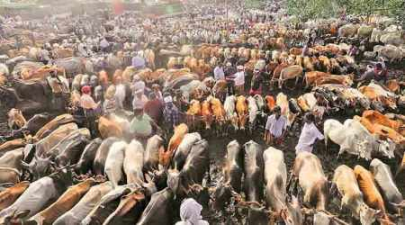 Proposed revision: Govt relaxes rules on cattle market, drops reference to slaughter