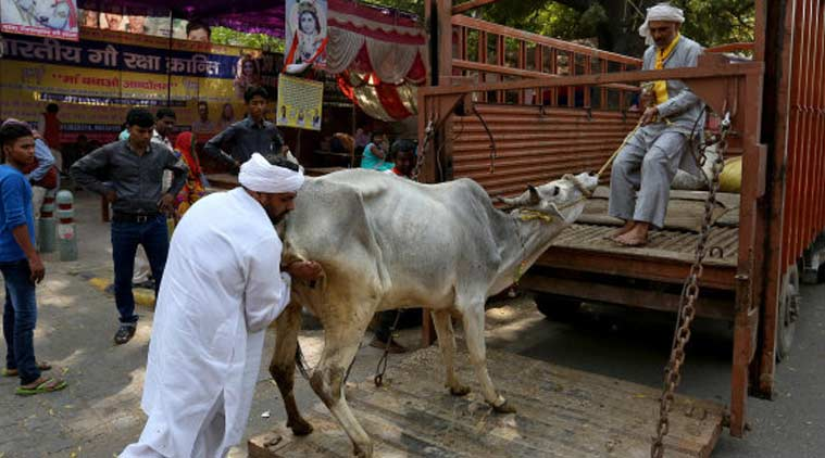 cattle sales, rajasthan, rajasthan cattle slaughter, illegal transportation of cattle, Rajasthan Bovine Animals act, Vasundhara Raje, rajasthan government, cow vigilantism, animal sale in rajasthan