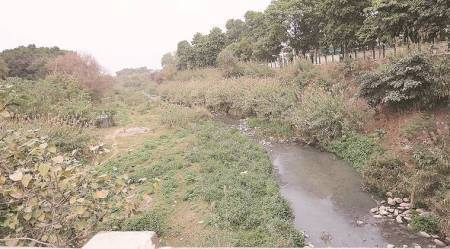 mohali, N-choe, N-choe cleaning, mohali municipal corporation, chandigarh news, mohali drainage, GMADA, greater mohali area development authority, indian express