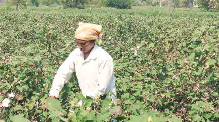 Telangana breaks new ground in  farm subsidy