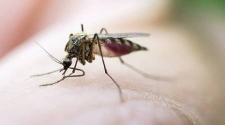 Concern over dengue, malaria: BMC reserves 3,500 hospital beds ahead of monsoon