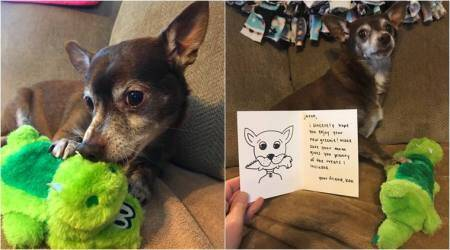 This adorable dog's favourite paw toy was discontinued; Tweeple got together to find one for it