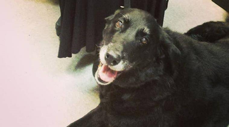 Pennsylvania Labrador mix dog Abby returns home after missing 10 years