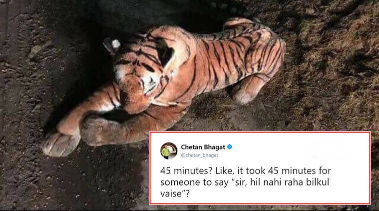 tiger, stuffed toy tiger, tiger zinda hai, cuddly toy tiger, Police's standoff with a cuddly toy tiger