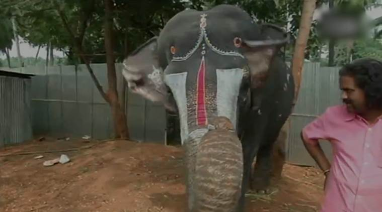 animal video, elephant video, elephant playing mouth organ video, viral video, indian express, indiane express news