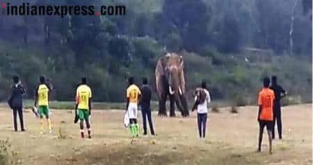 Padayappa at the football ground in Munnar on Tuesday. (Express photo/Vishnu Varma)