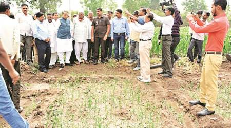 1.24 lakh hectares in 11 districts affected by hailstorm, saysreport
