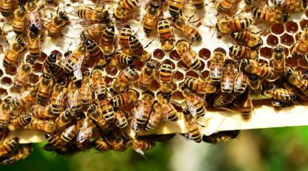 Pune: Honey Mission launched in city, beekeepers receive 10 boxeseach