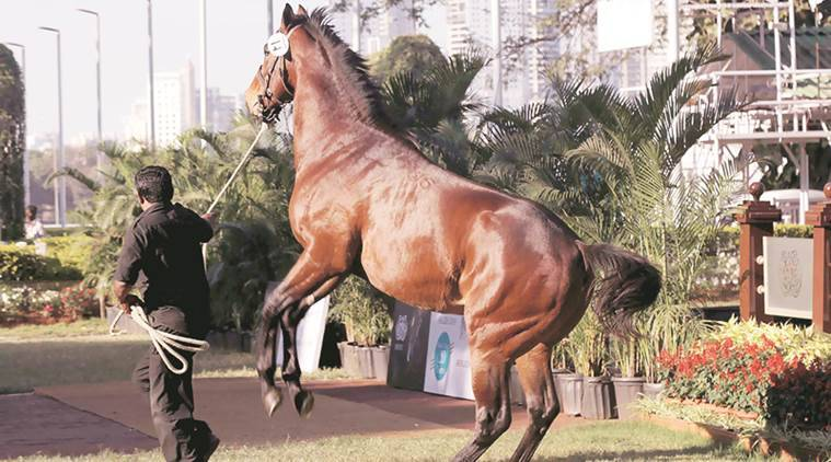 Stands full at Mahalaxmi to welcome horse auction after 20 years