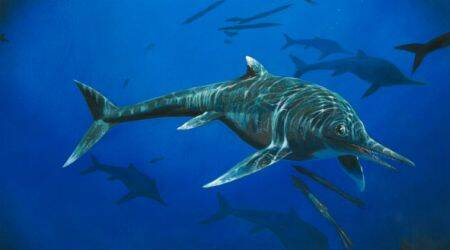 Rare 200 million-year-old ichthyosaur species discovered